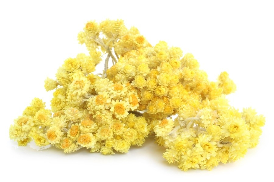 Benefits of Helichrysum Essential Oil