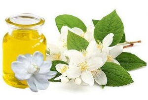 Benefits of jasmine absolute