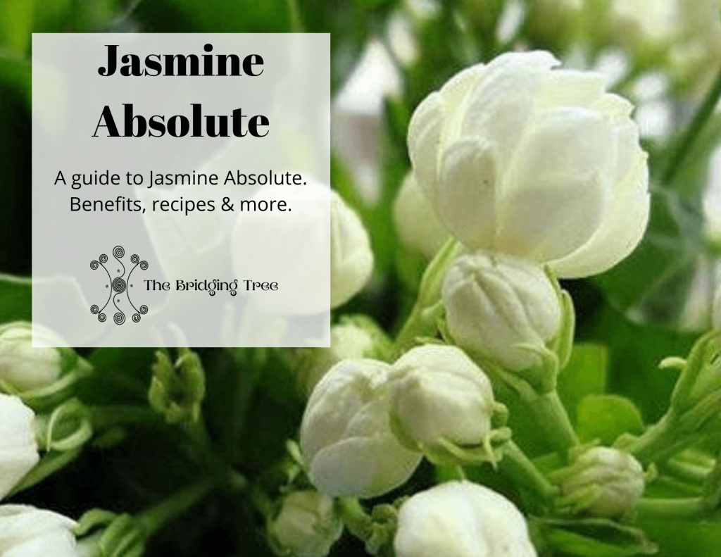 Jasmine absolute